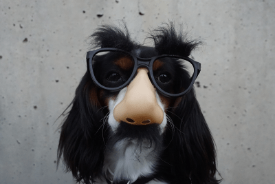 Does the Incognito Mode hide your IP address? How to hide IP